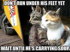 Plotting Revenge: Cats are always around . . . always watching.