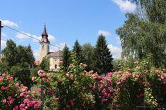 Elbűvölő rózsakert a Bodrogköz egyetlen városában | Balkonada