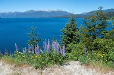 Lago Carlos Bariloche along the Seven Lakes Route north of Bariloche, Argentina | heneedsfood.com