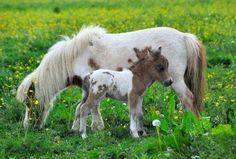 Pony met veulen