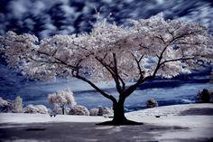 cemetery_tree.jpg (864×578)