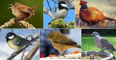 Découvrir les oiseaux de France avec les sons et les images - tout est gratuit. Aussi sur votre iPad et téléphone portable! http://www.chant-oiseaux.fr/
