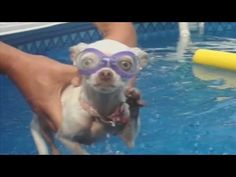 """Dogs + Water = FunParadise valley   dog training """"k9katelynn"""" dogs swim!! See more about tolleson    dog training at k9katelynn.com! 17,200 plus on Pinterest! Over 110,000 views on google plus!"""