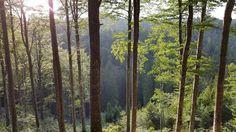 Tämän kirjoituksen kuvat ovat Sloveniasta, jossa avohakkuut kiellettiin kokonaan muutama vuosikymmen sitten. Kymmenien tuhansien hehtaarien yhtenäiset metsäalueet peittävät nyt Alppien rinteitä. Me…