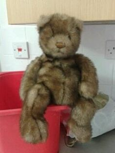 Found on 03/07/2015 @ Pattishall Northants. Beautiful bear found at Pattishall Playing Fields, we are looking after him well whilst he searches for his home ???????? Visit: https://whiteboomerang.com/lostteddy/msg/9khh3l (Posted by Angela on 06/07/2015)