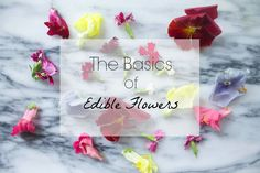 The Basics of Edible Flowers - great guide on how to use edible flowers