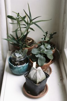windowsill garden