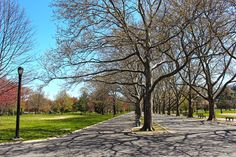 Flushing Meadows Park Trees