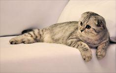 Mac the Little Snow Leopard by Lilla-Mu on DeviantArt