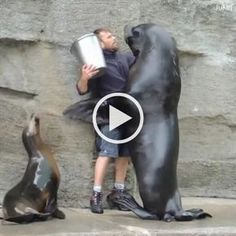 If a GIF can produce the precise same message in seconds, why send a lengthy, belabored text using real phrases. Funny Laugh, Wtf Funny, Funny Fails, Funny Jokes, Hilarious, Funny Humour, Cute Funny Animals, Funny Animal Pictures, Cute Baby Animals