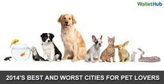 Orlando is rated the 9th best city for Pet Lovers.