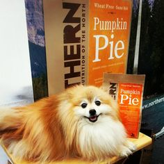 Pumpkin Pie biscuits and super cute doggy!
