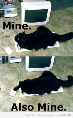 My cats do this every time I get online.  If you get a weird email from me, it's probably from them.