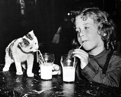 kitty got milk