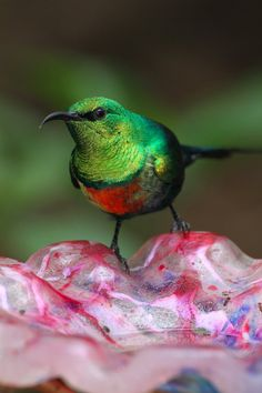 Sunbird by heatherae