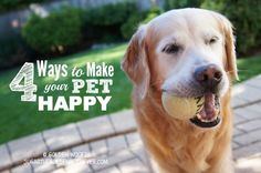 Ways Make Happy Pets #GetHealthyHappy @goldenwoofs