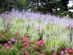pink roses, purple liatris, and purple russian sage Planting Design! Aline