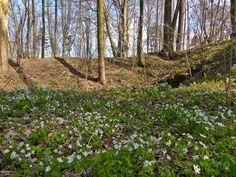 szlaki i bezdroża: Lubsza - rezerwat Góra Grojec Plants, Plant, Planets
