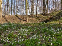 szlaki i bezdroża: Lubsza - rezerwat Góra Grojec