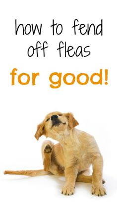 Great tips! How to help your pet fend off fleas for good.