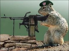 "While studying the War of 1812 and the Battle of New Orleans my kids thought this picture was a ""squirrel gun""."