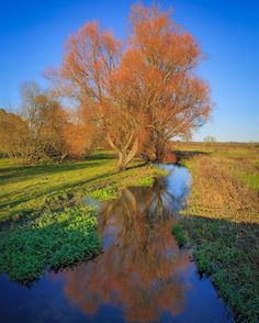 Reflection A tree by a river in the sunshine. What's not to love? Lovely rich deep vibrant colours reflecting in the gently flowing steam. Pictured near Ringwood in Hampshire. Posted 29th December at 4.45am #canon6d #canon #canonphotographer #canonphotography #canonphotos #rickmcevoyphotography #rickmcevoy #architecturalphotography #architecturalphotographer #architecturephotography #architecturephotographer  #constructionphotographer #dorsetphotographer #hampshirephotographer…