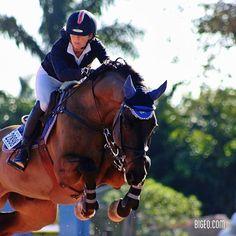 equestrian show jumping | bay jumper