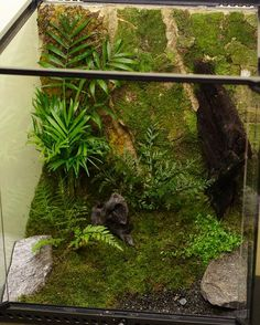 Whistling tree frog habitat NZ