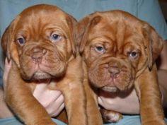 puppies.....soooo cute