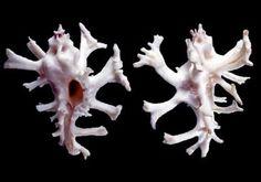 Google Image Result for http://www.museumwales.ac.uk/media/11399/thumb_400/Mollusca1.jpg