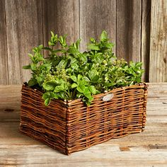 Natural Willow Herb Planter