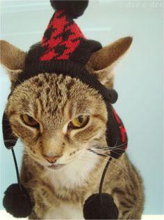 adorable, awww, cats in hats, chuckle, cuddly, cuteness, funny, furry, fuzzy, haha, hats, kermit, lamb, lol, warm