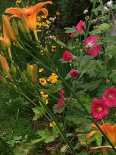 Lillies, Coreopsis, Hollyhocks from the F garden.