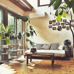 Living with plants room