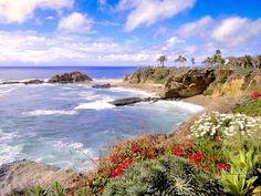 Wallpapers Laguna Flowers, Laguna Beach, California, papeis desktop image Estados Unidos World Landscapes