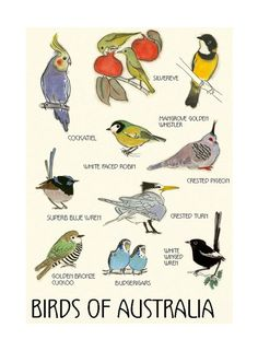 Items similar to Australian Bird wall art - Australian Bird Decor - Bird Art - 4 for 3 SALE - Birds of Australia Print - X on Etsy Bird Wall Art, Bird Artwork, Artwork Prints, Budgerigar Bird, Crested Pigeon, Tourism Poster, Cat Art Print, Matou, Australian Birds