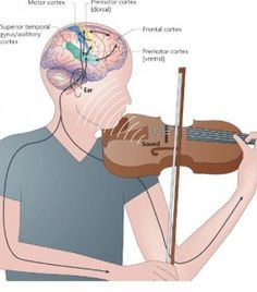 Article about how music helps the brain.  http://jonlieffmd.com/blog/music-training-and-neuroplasticity