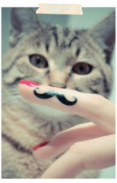 Cat stache see more at http://blog.blackboxs.ru/category/funny-cats/