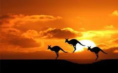 a kangaroo in the sunset