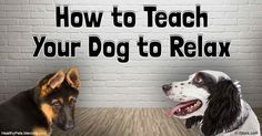 """Occasionally, a dog needs """"cage rest"""" to recover from an injury or surgery. """"Rest time for recovery"""" is probably a better descriptive term than """"cage rest."""" http://healthypets.mercola.com/sites/healthypets/archive/2016/07/20/dog-rest-time-for-recovery.aspx"""