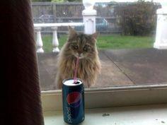 12.Depois de caçar passarinhos pelo bairro todo, Boris só pensa em um refresco