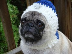 Dog Hat  Hanukkah with the Star of David / Made To by Sweethoots, $20.00