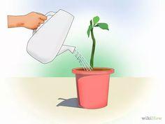 Cómo propagar Bugambilia