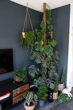 Indoor Garden, Garden Plants, Indoor Plants, Home And Garden, Room With Plants, House Plants Decor, Decoration Plante, Plant Aesthetic, Bedroom Plants