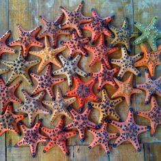 Starfish Sanctuary