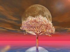Luna sangerie si Eclipsa Totala de Luna din 4 aprilie – Portalul DRAGOSTEI