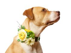Deluxe Custom Floral and Satin Canine Wedding Corsage for Flower Dog and Pet Attendant (Pet Accessories)