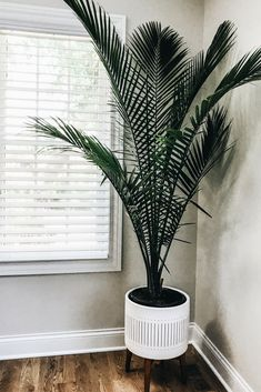 Decorating With Green House Plants. Home Design And Decor Ideas And Inspiration.