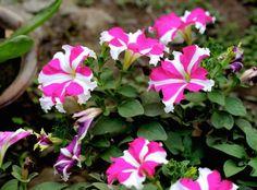 10 plantas para terrenos salinos