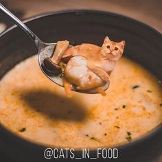 Artist Photoshops Cats Into Food, And The Results Are So Cute New Pics) Cute Cat Gif, Cute Cats, Funny Cats, Donut Shirt, Funny Cat Photos, Kittens Cutest, Cat Day, Cats Of Instagram, Cat Lovers